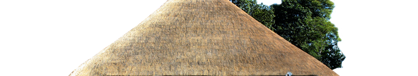 Thatching grass